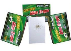 Cockroach Glue Trap
