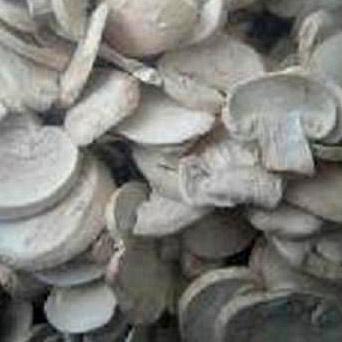 FD Mushroom (FD Mushroom)