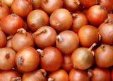 Onion (Лук)