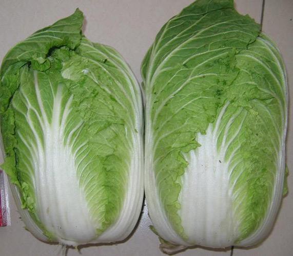 Chinese Cabbage (Китайская капуста)