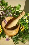 Medicinal herbs (лекарственные травы)