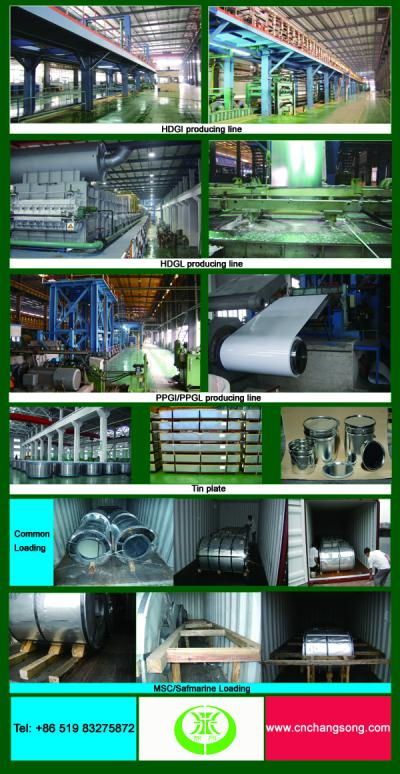 Galvanized steel coil ()