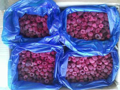 Grade A frozen fruits IQF red raspberry frozen raspberry (Оценка замороженные фрукты IQF красная малина заморожена малина)