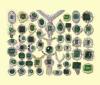 Emerald (Изумруд)